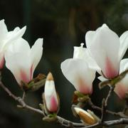 Foto Flores Propuesta primavera 2018
