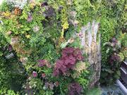 Vistas Jardín vertical